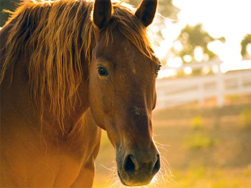 Actualité : stage cheval et éthologie